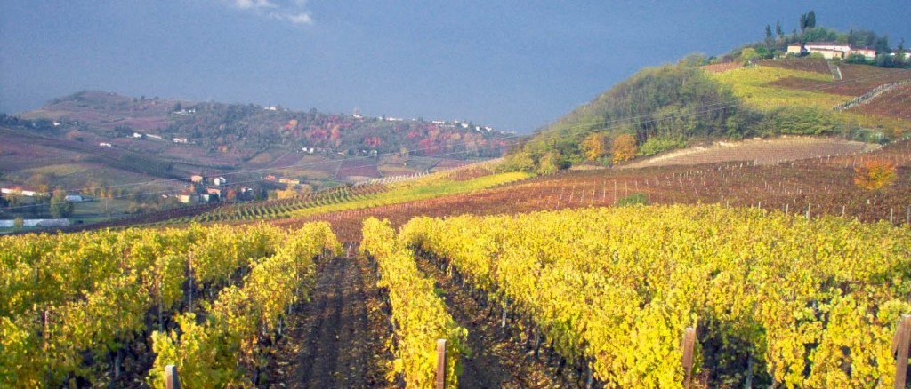 The Collina Crena Vineyards in autumn