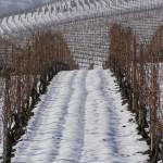 Le vigne in inverno